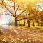 Dein perfekter Herbst