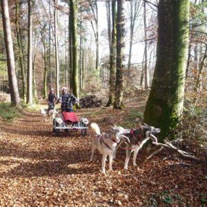 exklusiv-schlittenhunde-wagenfahrt-im-herbst