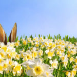 Von Hasen und Eiern - Osterbilder und - geschichten