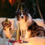 Schlemmen an Silvester