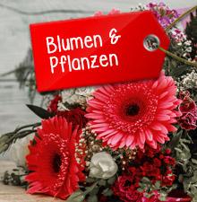 Blumen und Pflanzen zu Weihnachten